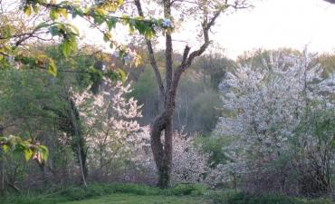 splendeur de printemps