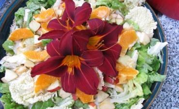 hemerocalle (lys du jour, fleur comestible)